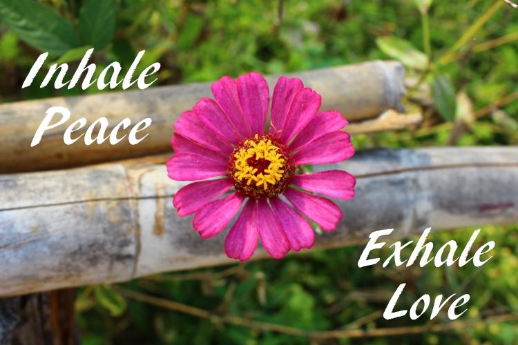 inhale peace exhale love